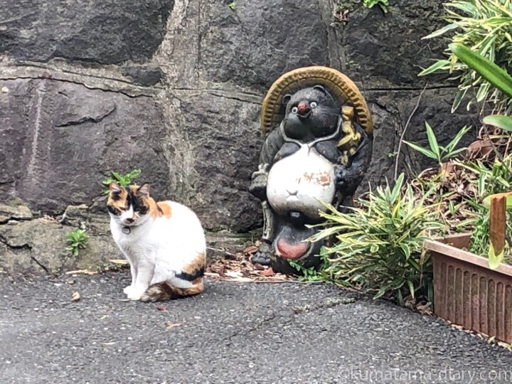 谷中の三毛猫さん