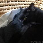 5時起きの飼い主より早起きな黒猫