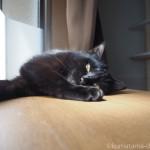 出窓で寝そべる子猫