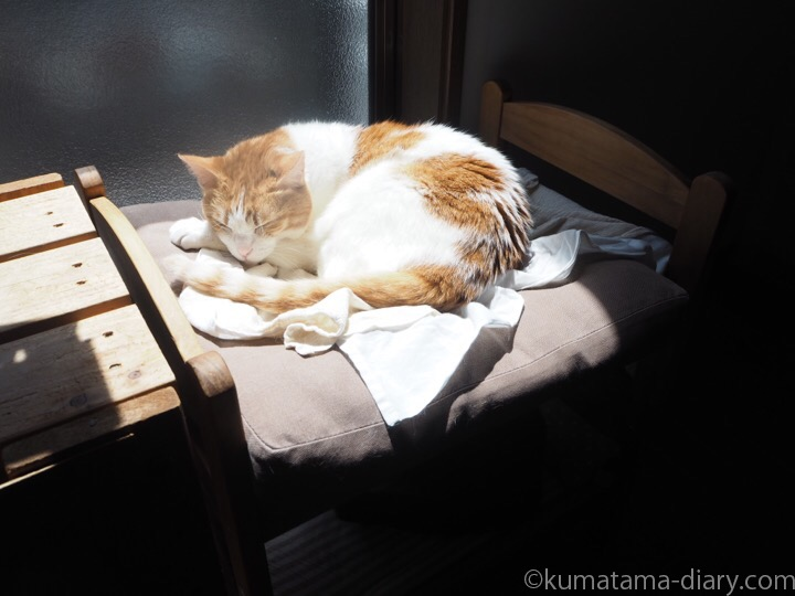 たまきIKEA猫ベッド
