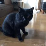 海苔が好きな黒猫