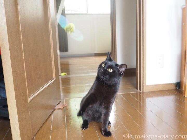 じゃれ猫びょーんとふみお