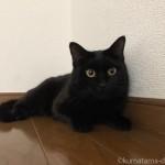 ロフトで立ち上がる黒猫