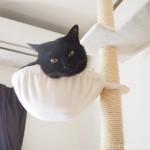 キャットタワーのハンモックから顔を出す猫