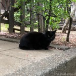 【文京区】緑に映える「白山神社」の黒猫さん