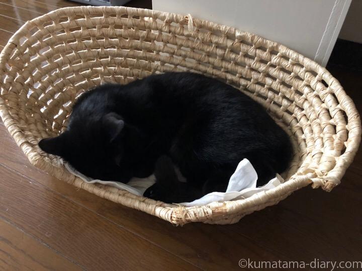 メイズ製ペット用ベッドで寝るふみお