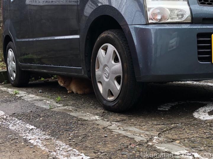 車の下の茶トラ猫さん