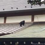屋根の上にいた「白山神社」の黒猫さん