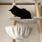 キャットタワーのハンモックを見つめる猫