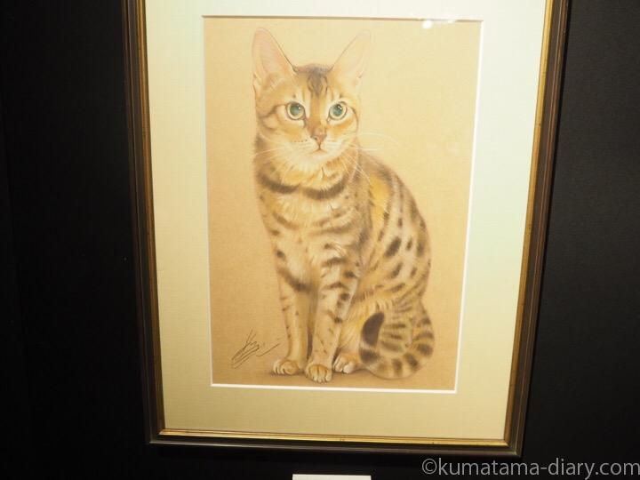目羅健嗣さんの猫