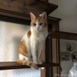 キャットウォークを愛用する猫たち