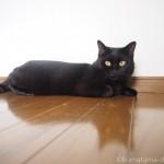 ロフトでくつろぐ黒猫