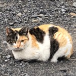 【狭山市】駐車場の猫さんたち