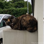 【文京区】雨上がりの駐車場にいた猫さんたち