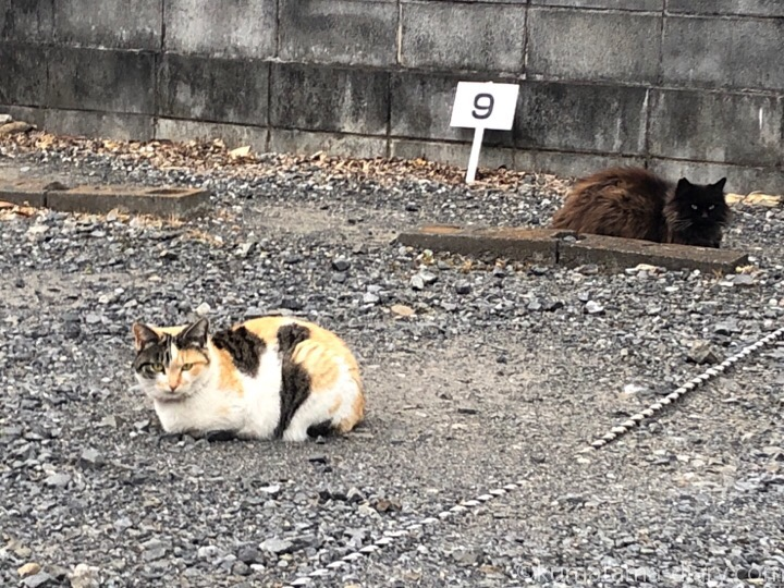 黒猫さんと三毛猫さん