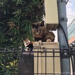 【文京区】お墓の上の三毛猫さんとサビ猫さん