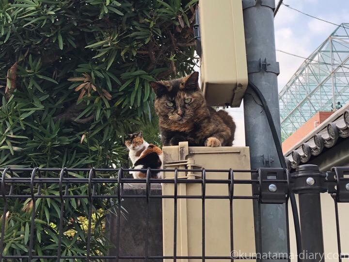 サビ猫さんと三毛猫さん