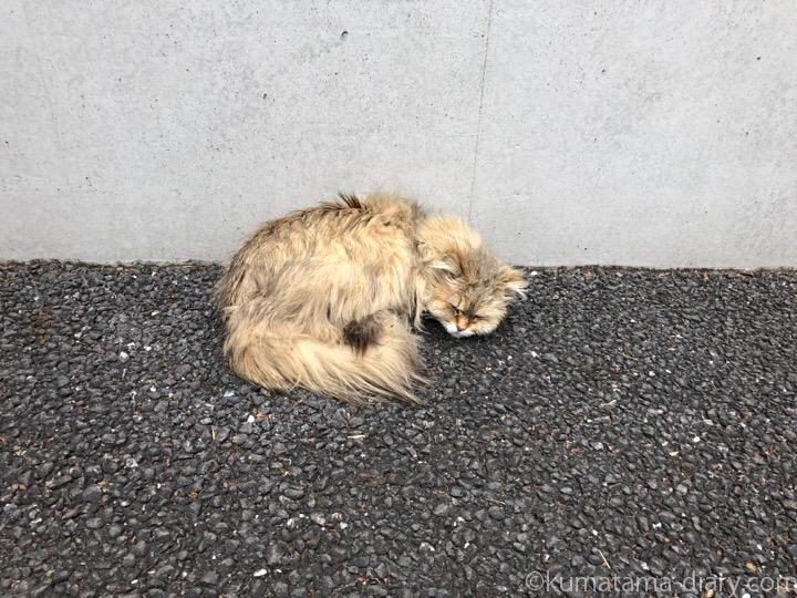 陽泉寺長毛猫さん