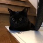 玄関で香箱座りをする猫