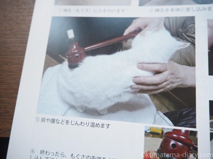 猫さんにお灸
