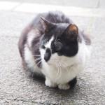 「東池袋中央公園」の黒白猫さんたち