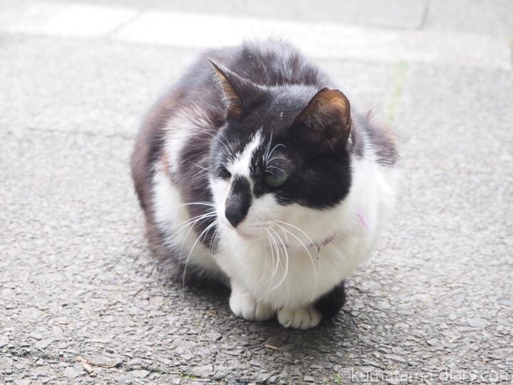 東池袋中央公園黒白猫さん