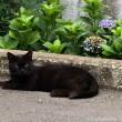 黒猫さんとあじさい
