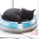 「cat it プレイサーキット」にスポッとはまって寝る猫