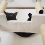 キャットタワーの一番上で寝る黒猫