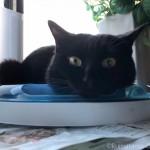「cat it プレイサーキット」にあごのせする猫