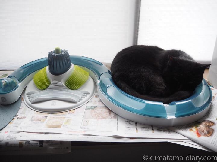 cat it プレイサーキットとふみお