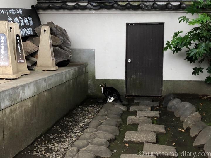 中野区猫さんジャンプ直前