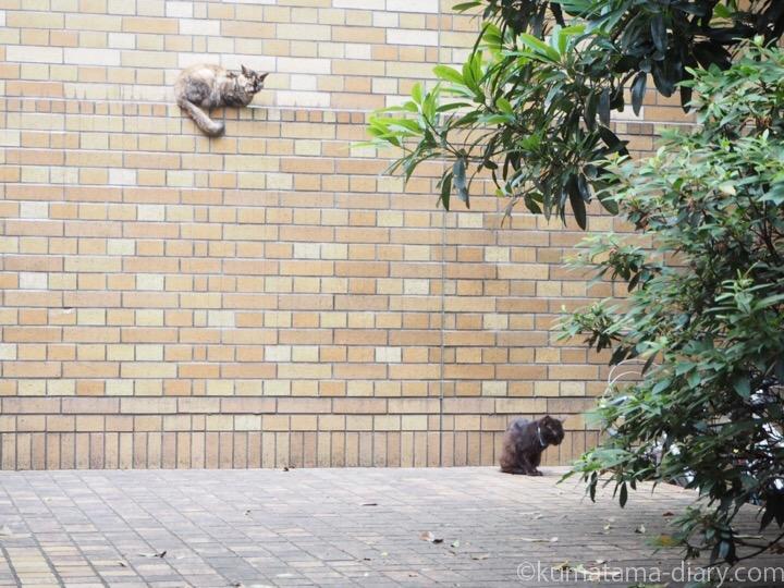 東池袋中央公園猫さん