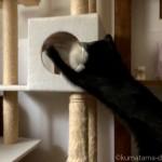キャットタワーのボックスにいる猫にパンチする黒猫