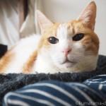 「幸せのインナーねこ」の上で寝る猫