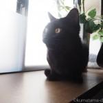 「オムロン メッシュ式ネブライザ NE-U22」で5分しか吸入しない猫