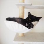 キャットタワーのハンモックから足を出す猫