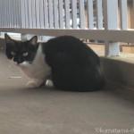 入間市の猫を愛する工務店の黒白猫さん