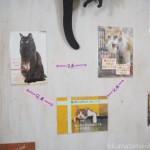 りんご猫専門の保護猫カフェ「ネコリパブリック東京中野店」のステキな三兄弟