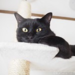 キャットタワーの一番上で掃除が終わるのを待つ猫