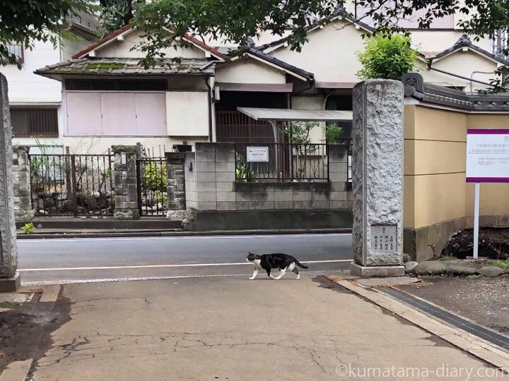 中野区猫さん