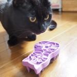 換毛期の黒猫〜猫型ブラシ「KONG(コング)」に八つ当たり〜