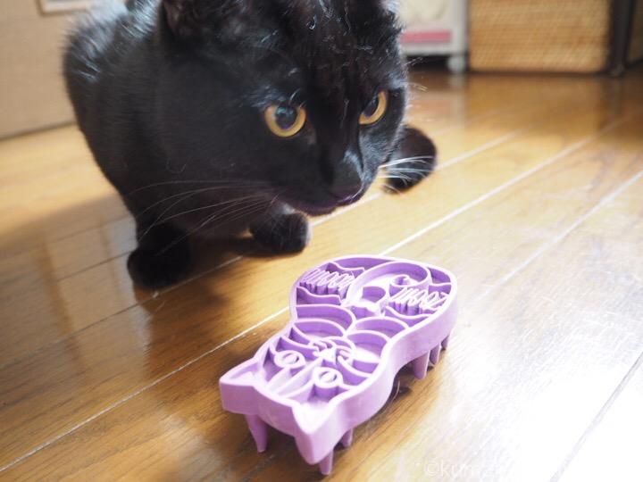 猫型ブラシとふみお