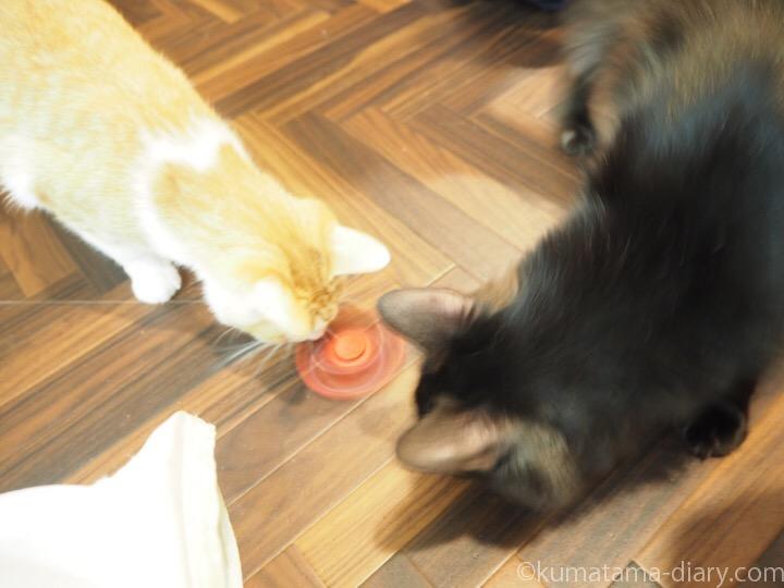 ハンドスピナーと猫さん