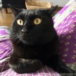 気づいたらそばにいる黒猫