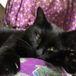 【月命日】ネガティブなことが嫌いな猫