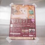 楽しみながらネコ助けできるイベント「ネコ市ネコ座 with トレッタ@東京ドームシティ」に行ってきました