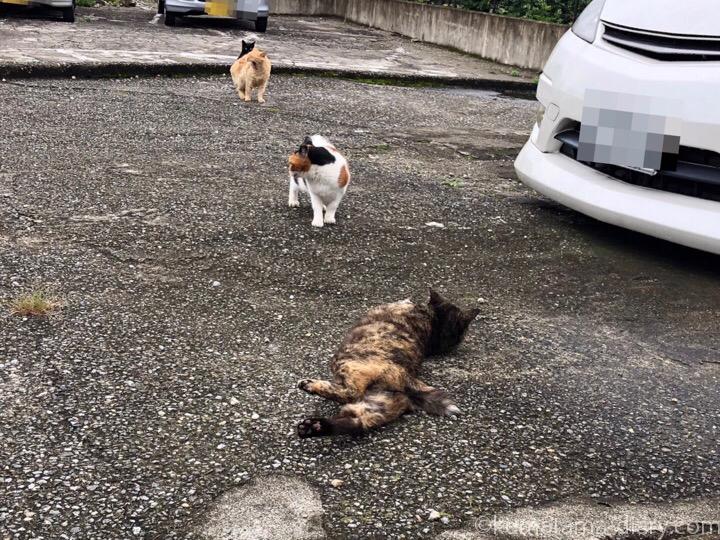 駐車場の猫さんたち3