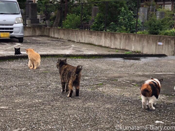 駐車場の猫さんたち4