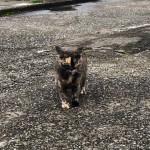 【文京区】駐車場で一番強いサビ猫さん
